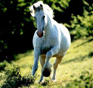 Sen o białym koniu