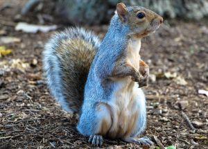 Sen o wiewiórkach